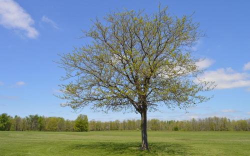 Fát ültettek a Skanzenben