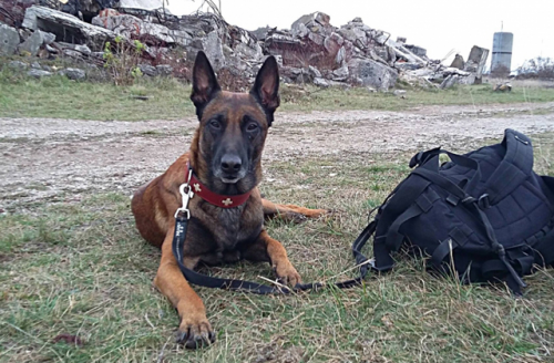 Magyar kutya a világ legjobb romkutatói között