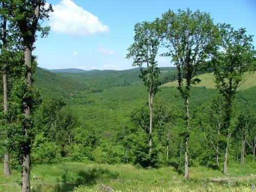 A hazai denevérfauna nagy része megtalálható a Pilisi Parkerdőben